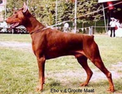 INT'L.CH Ebo v.d. Groote Maat