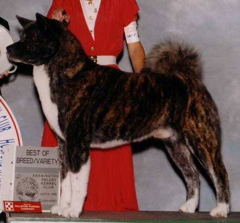 AKC/CAN CH Northland's Shere Khan Of SDM