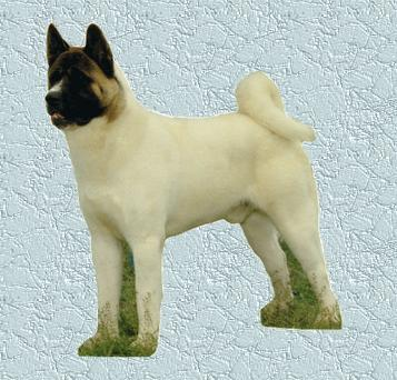 AKC CH Chereed's Wiseguy